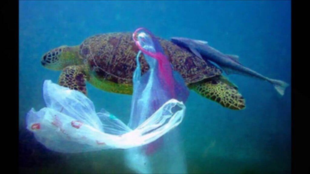 Single Use Plastic Awareness program