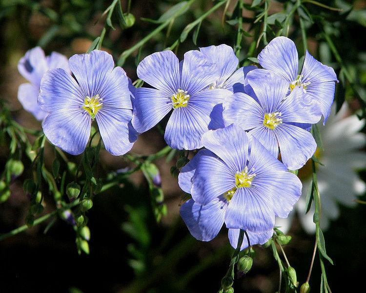 36 List of Flower फूलों के नाम