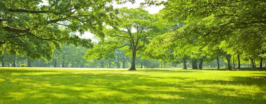 वृक्ष पेड़ Tree 4 Important Tree and Uses of Trees